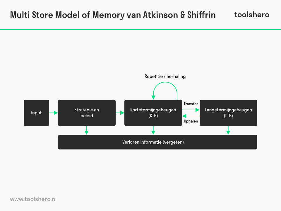 Multi Store Model of Memory - ToolsHero